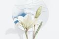 bloom-blossom-broken-2575280